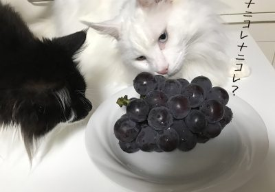 美味しい葡萄/